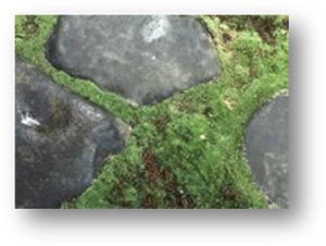 Roji stones